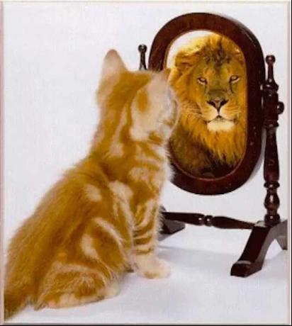 自信的猫.png