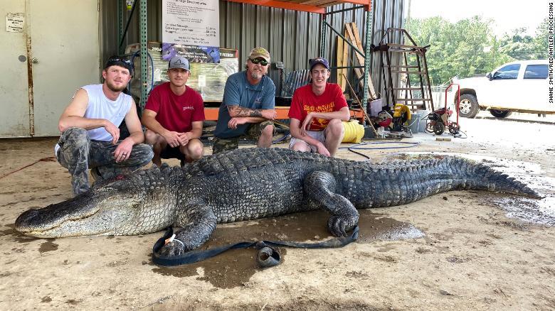 210913142935-01-alligator-artifacts-in-stomach-exlarge-169.jpg