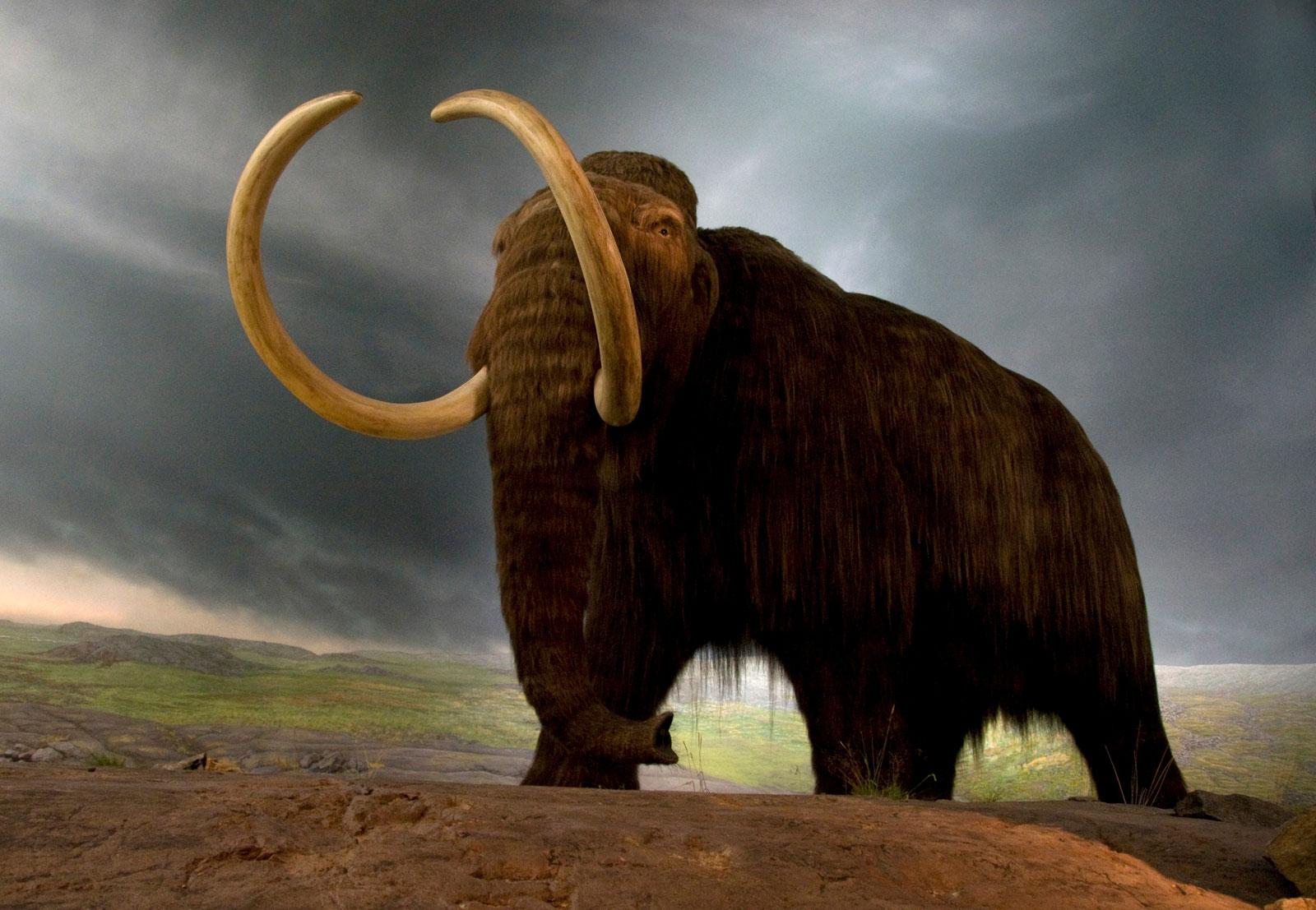 example-museum-replica-species-Canadian-de-extinction.jpg