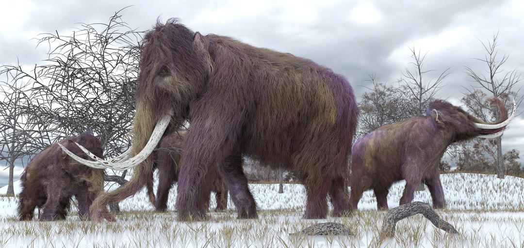 mammoth-illustration-full-width.jpg